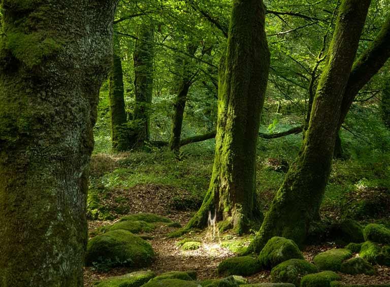 On voit une magnifique forêt verte de mousse, un rayon de lumière vient frapper le sol où se révèle un esprit des lieux
