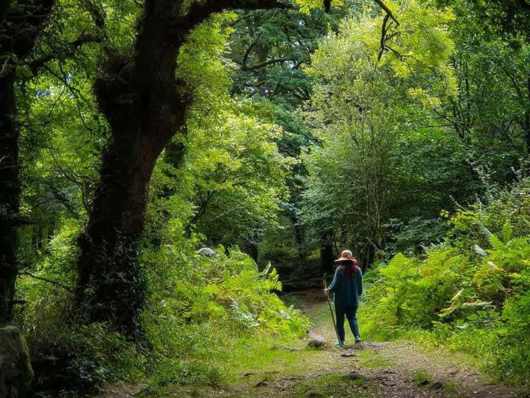 On voit une personne prendre un bain de forêt en marchant dans une forêt verdoyante, oxygénante.