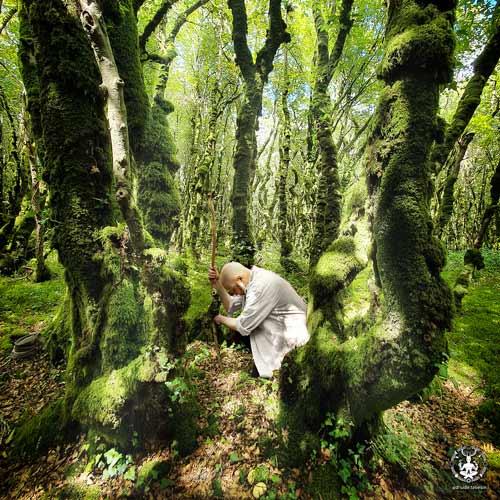 On voit le druide taliesin en séance de Sylvareliance, accroupi ai pied d'arbres dans une forêt