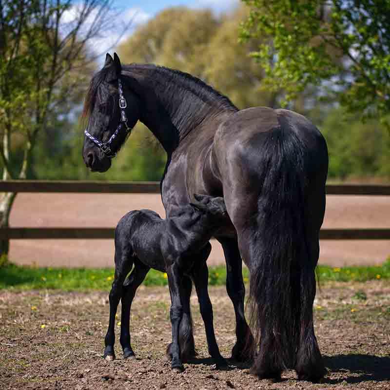 éthique sur les chevaux