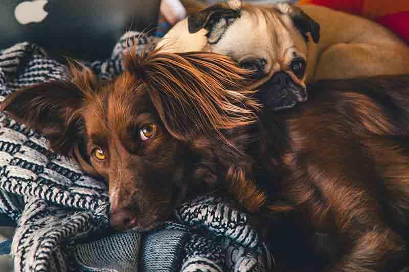 éthique sur les chiens. Deux chiesn dorment l'un sur l'autre.