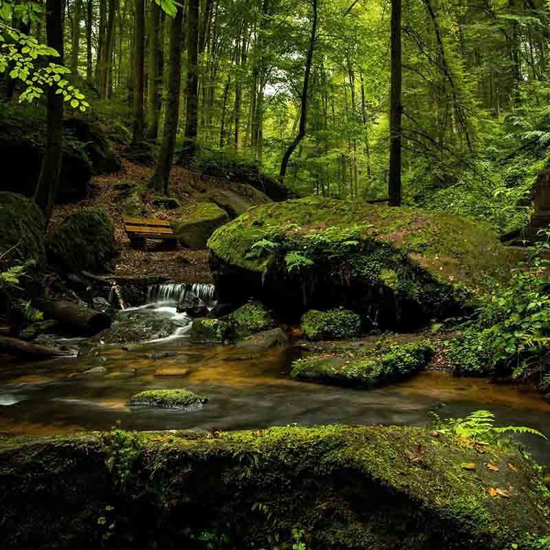 éthique sur la forêt. une forêt verte et un petit ruisseau en cascade entre des rocher de granit.